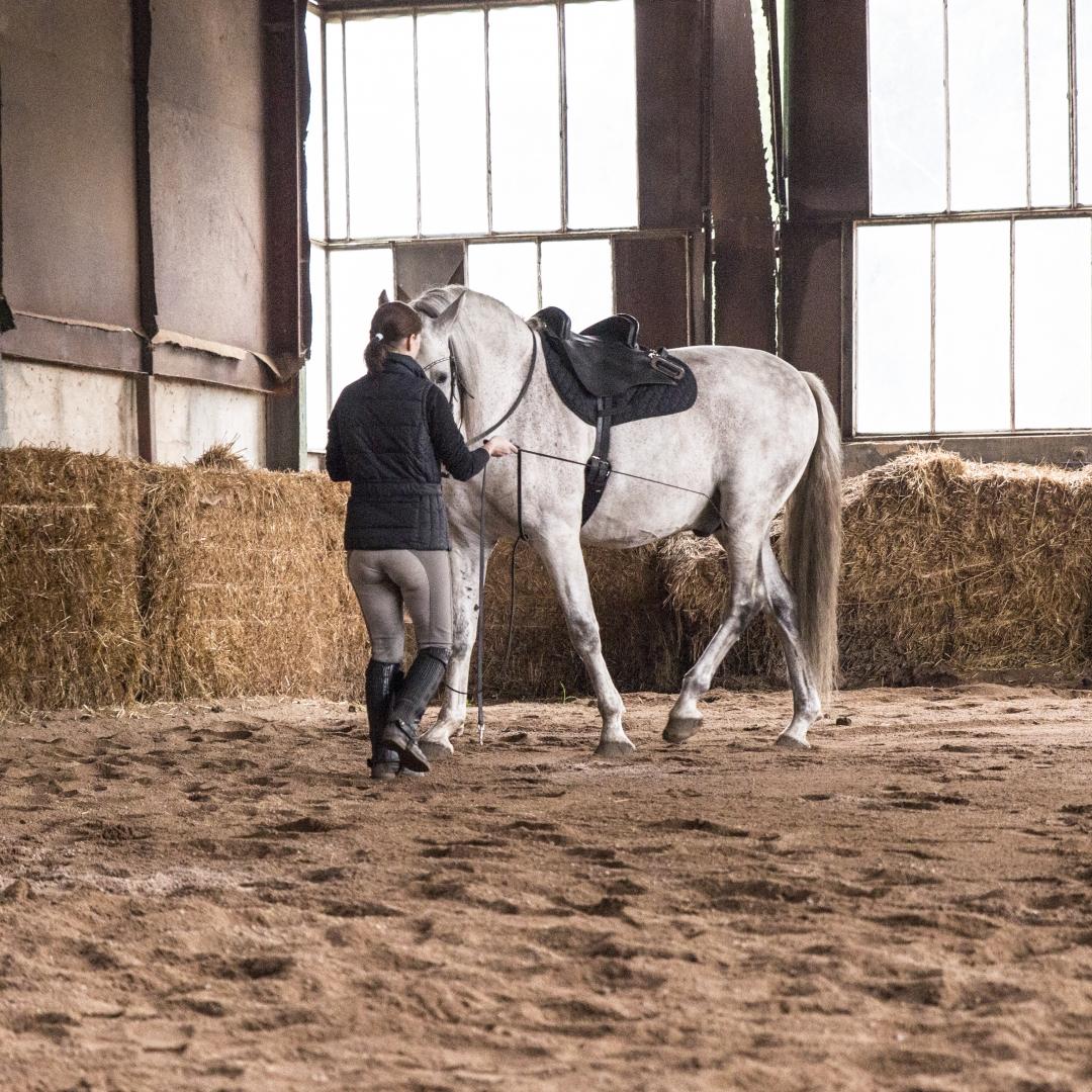 Chiquito PRE, stallion *2006 as a teacher