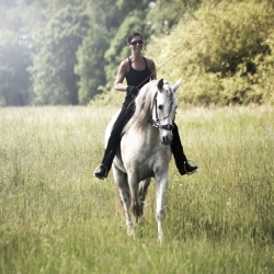 Chiquito PRE * 2016 & Bitless Art of Riding & Academic Art of Riding