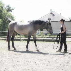 CHIRON PRE stallion, (*2015) pic. 1406 2017