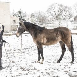 Chiron PRE stallion *2204/2015