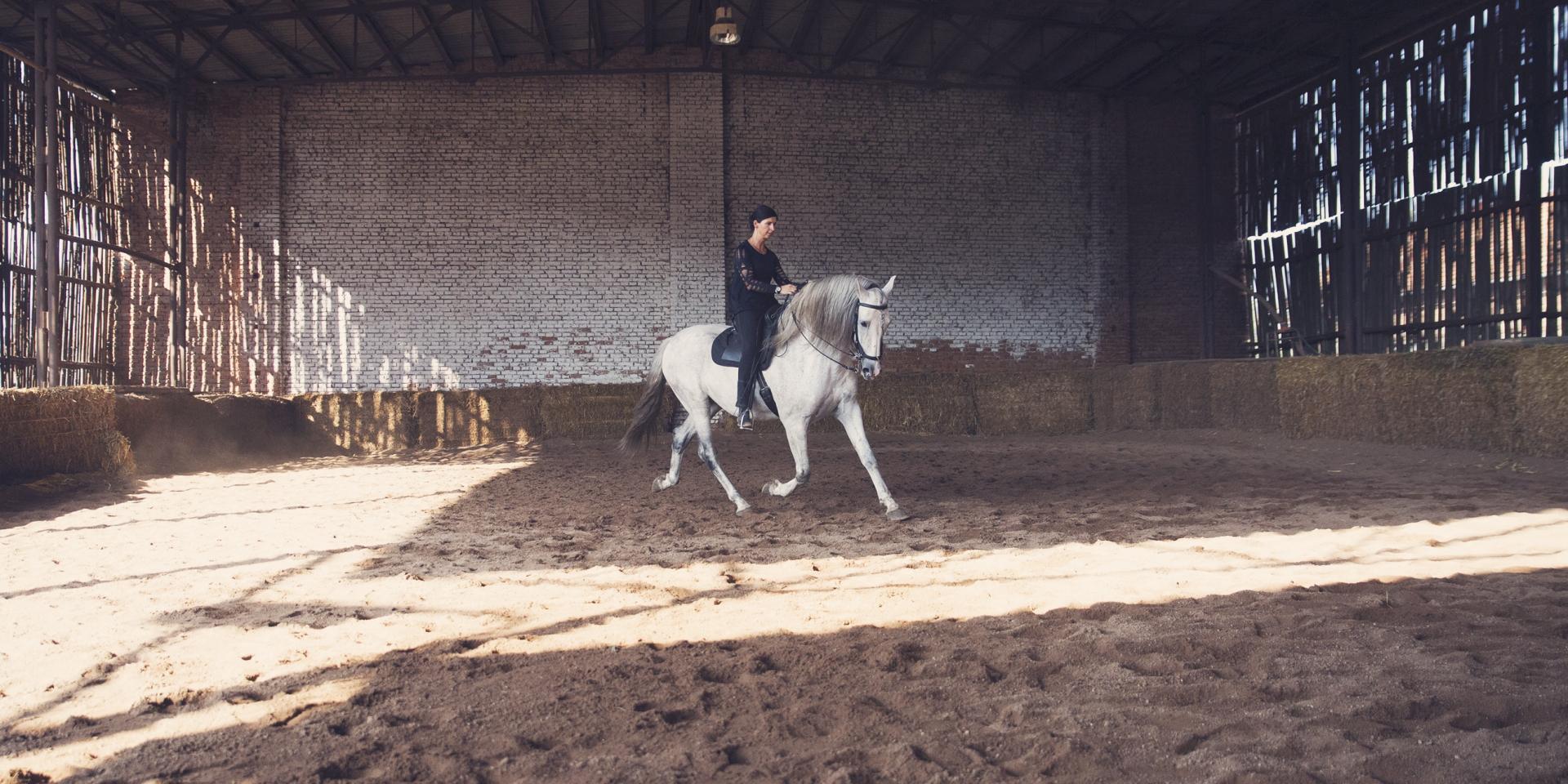 Chiquito (PRE, stallion, *2016) september 2017