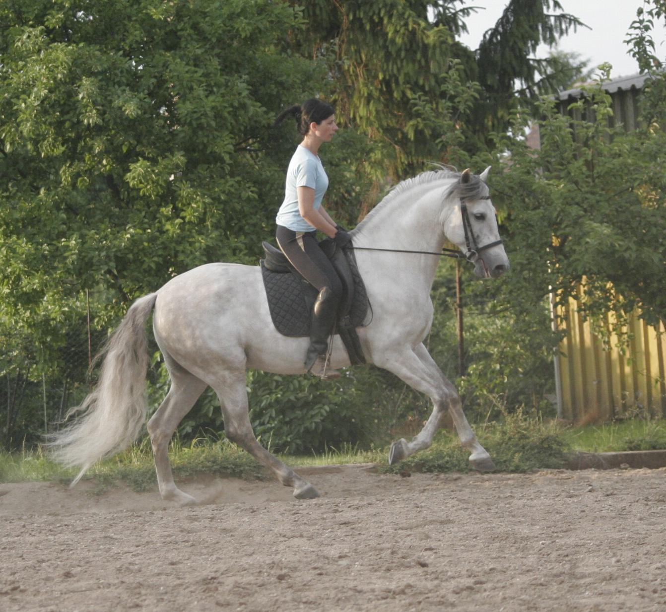 Jaleo PRE 11 y. (pic 2007)