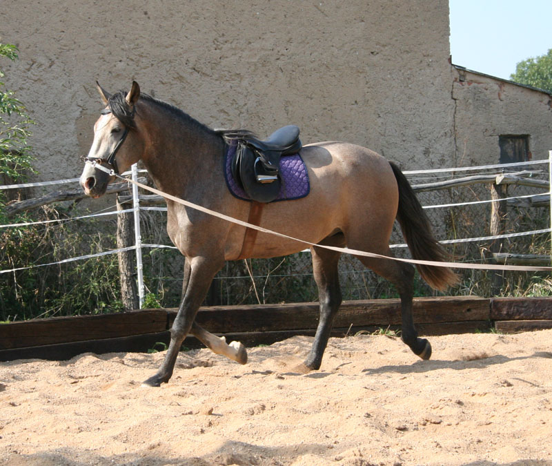 Chiquito - PRE *1008/06 (pic 2009)