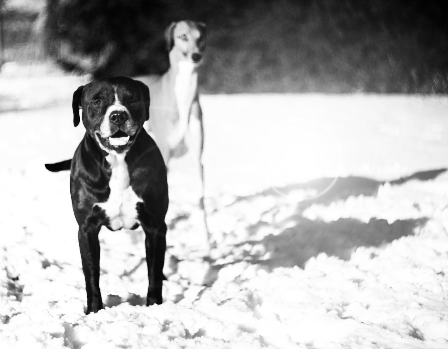 Tazy & Aflu by ashaadox