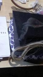 ptak uvaha 1 ashaadox