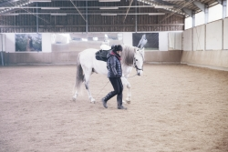 Chiqui & Ashaadox Academic Art of Riding with Claudia Strauss 12/2017