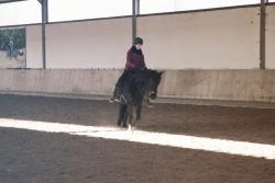 Simia & Ashaadox Academic Art of Riding with Claudia Strauss 12/2017