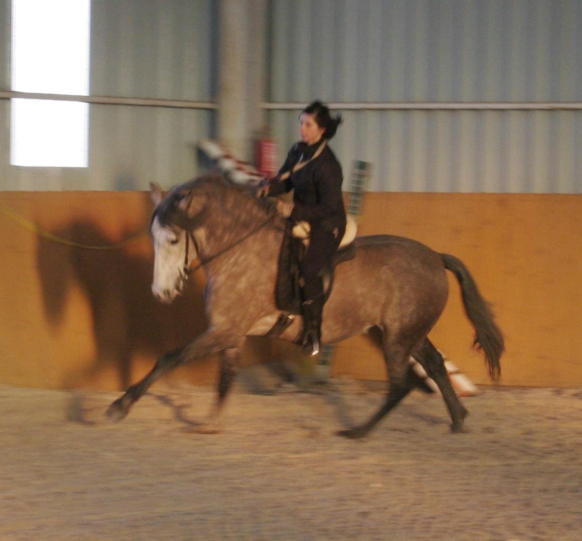 Chiquito - PRE *1008/06 (pic 2012)